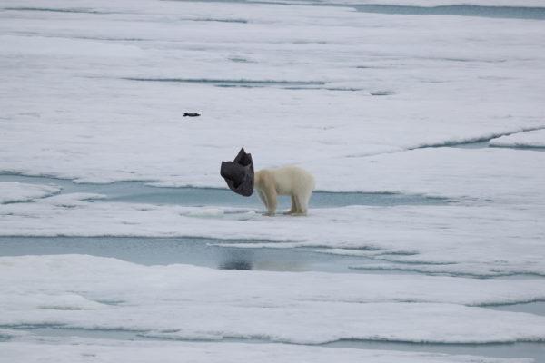 Meine Begegnung mit einem Eisbären im Detail